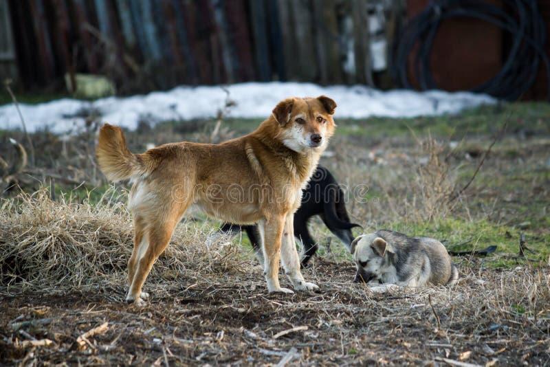 τα σκυλιά απομακρύνονται στοκ εικόνες με δικαίωμα ελεύθερης χρήσης