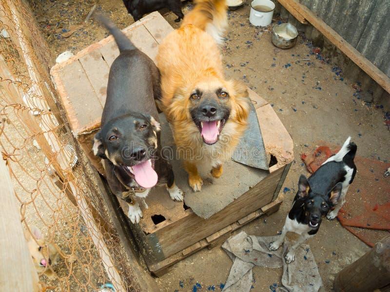τα σκυλιά απομακρύνονται στοκ φωτογραφία