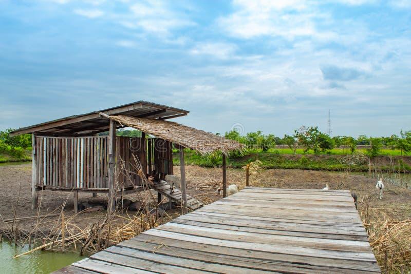 Τα σπίτια αιγών και χοίρων φιαγμένα από ξύλο στοκ φωτογραφίες