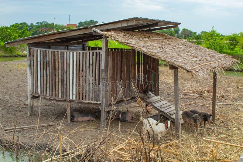 Τα σπίτια αιγών και χοίρων φιαγμένα από ξύλο στοκ εικόνα