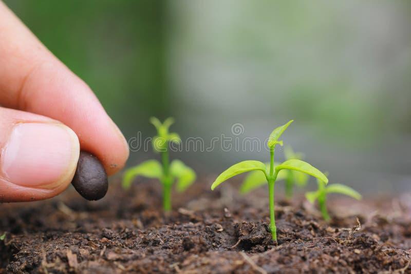 Τα σπορόφυτα αυξάνονται από το έδαφος και το χέρι φυτεύοντας έναν σπόρο στην εδαφολογική γεωργία στο φυσικό πράσινο υπόβαθρο, που στοκ εικόνες