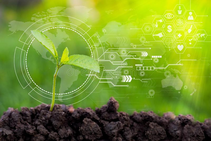 Τα σπορόφυτα τεχνολογίας γεωργίας είναι πράσινο, καφετί χώμα στοκ φωτογραφία