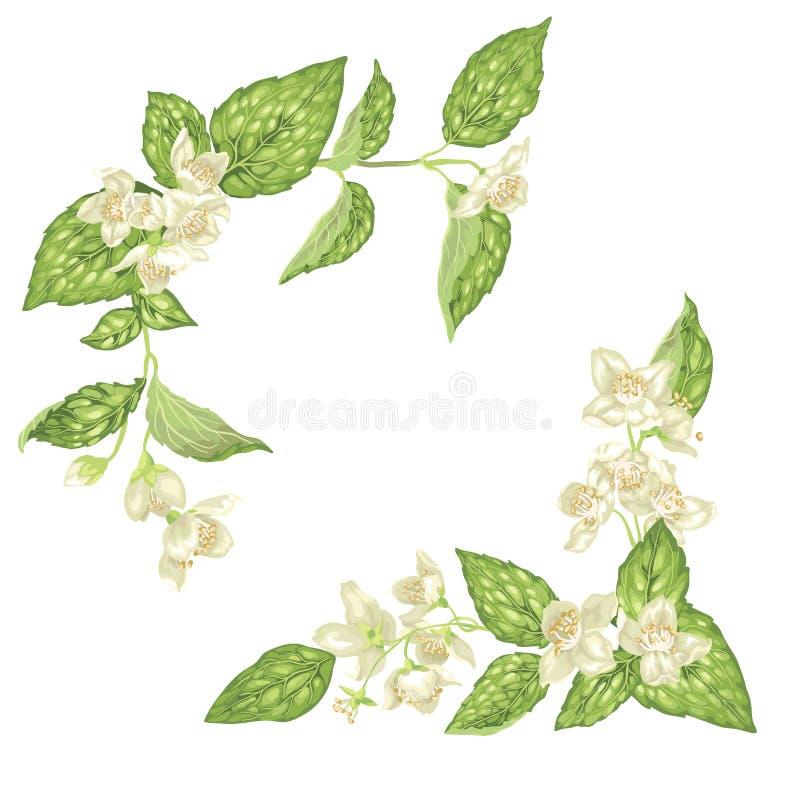 Τα στοιχεία ντεκόρ γωνιών με jasmine τα λουλούδια ανθίζουν κλάδοι στο rea απεικόνιση αποθεμάτων