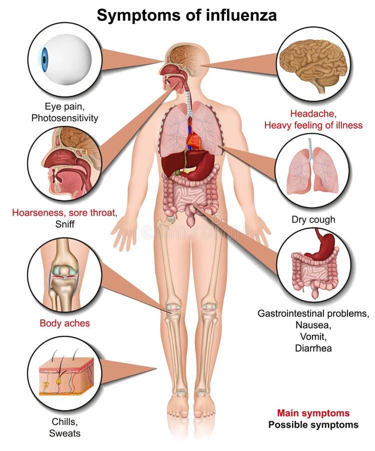 Τα συμπτώματα της τρισδιάστατης ιατρικής απεικόνισης γρίπης στο άσπρο υπόβαθρο απομόνωσαν infographic ελεύθερη απεικόνιση δικαιώματος