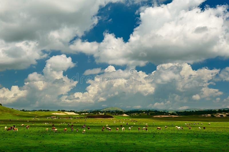 Τα σύννεφα επάνω το λιβάδι summmer στοκ φωτογραφία με δικαίωμα ελεύθερης χρήσης