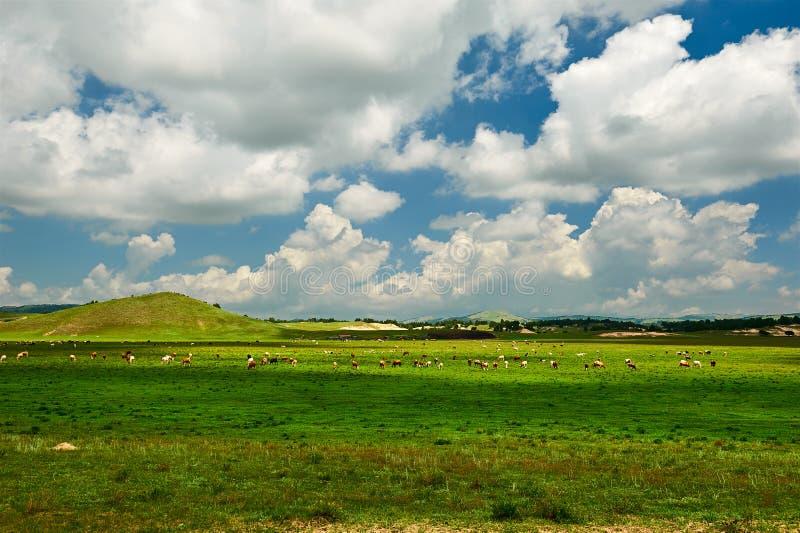 Τα σύννεφα επάνω το πράσινο λιβάδι στοκ φωτογραφίες με δικαίωμα ελεύθερης χρήσης