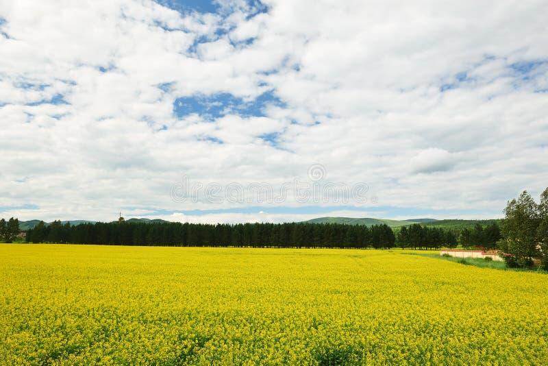 Τα σύννεφα και οι τομείς λουλουδιών στοκ φωτογραφίες
