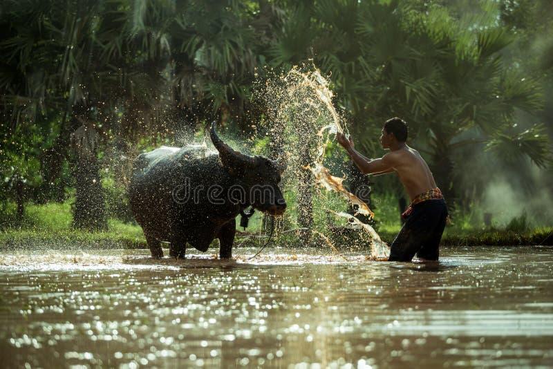 Τα ταϊλανδικά άτομα αγροτών λούζουν για τους βούβαλους στοκ φωτογραφία