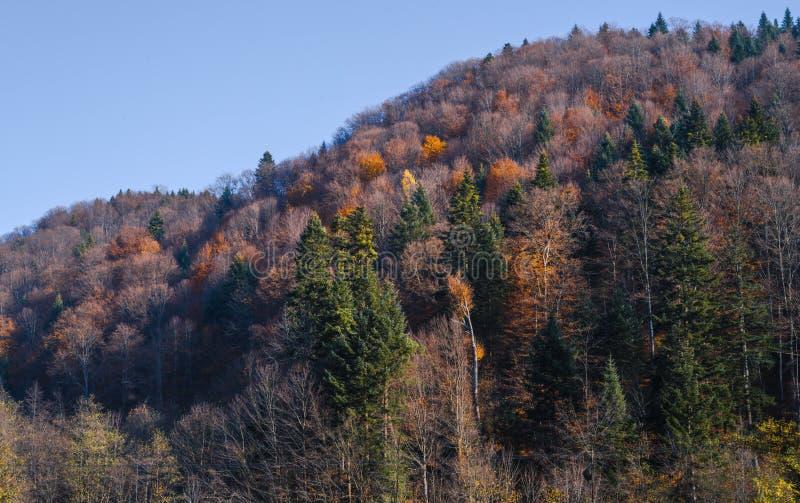 Τα τελευταία φύλλα στοκ φωτογραφία