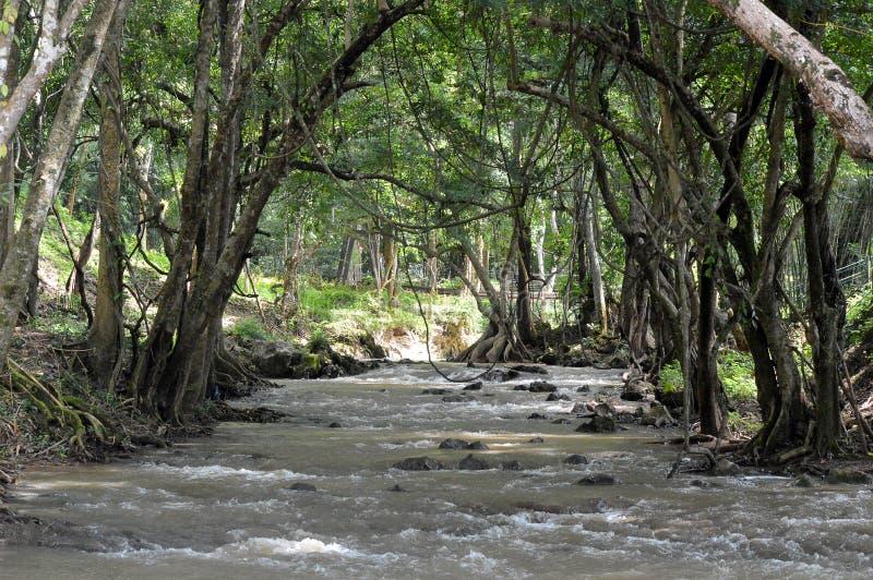Τα τρεξίματα ποταμών στον άγνωστο στοκ εικόνα με δικαίωμα ελεύθερης χρήσης