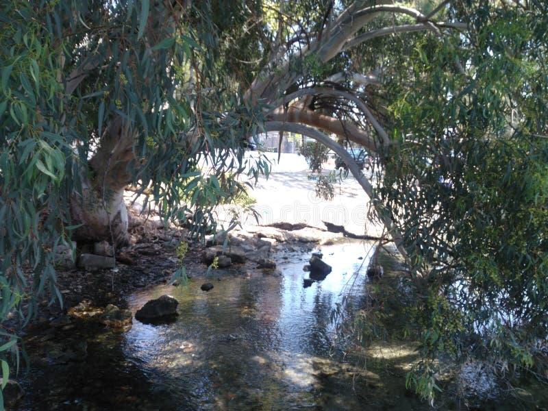 Τα τρεξίματα ρευμάτων κάτω από τα δέντρα στοκ εικόνα με δικαίωμα ελεύθερης χρήσης