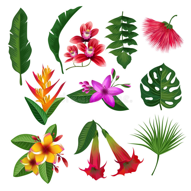 Τα τροπικά φυτά Χαβάη ανθίζουν τα φύλλα και τους κλάδους Η διανυσματική απεικόνιση απομονώνει στο άσπρο υπόβαθρο απεικόνιση αποθεμάτων