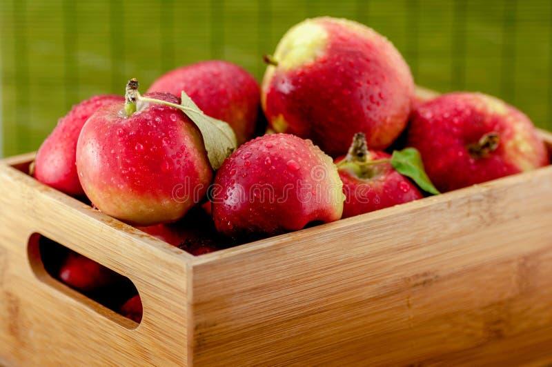 Τα υγρά μήλα με τις πτώσεις νερού σε ένα μικρό μπαμπού συσκευάζουν στο θολωμένο πράσινο υπόβαθρο στοκ εικόνες με δικαίωμα ελεύθερης χρήσης
