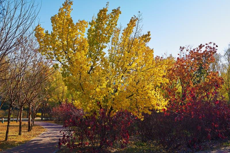 Τα φθινοπωρινά δέντρα στοκ εικόνα με δικαίωμα ελεύθερης χρήσης