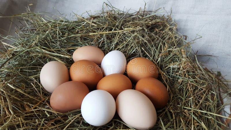 Τα φρέσκα αυγά κοτόπουλου των διαφορετικών χρωμάτων βρίσκονται σε έναν σωρό στο σανό Καλλιέργεια και οικογένεια Προετοιμασία για  στοκ φωτογραφίες