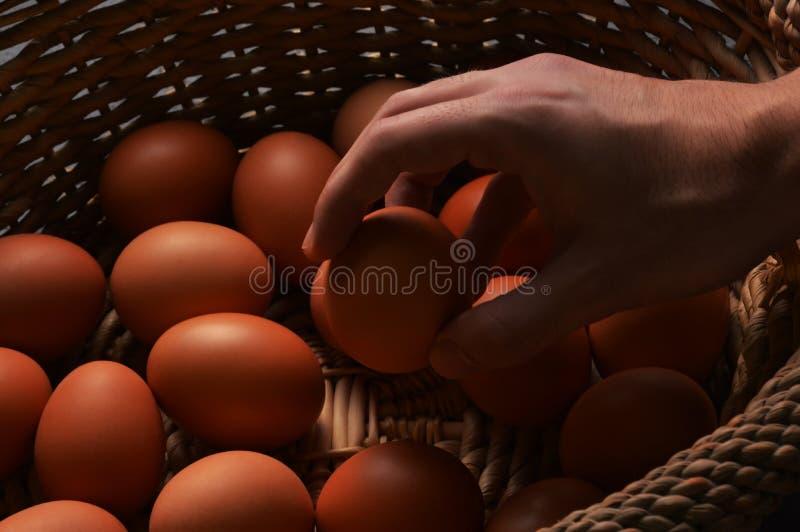 Τα φρέσκα οργανικά αυγά κοτόπουλου σε ένα ψάθινα καλάθι και ένα αρσενικό δίνουν το κράτημα ενός αυγού στοκ εικόνες με δικαίωμα ελεύθερης χρήσης