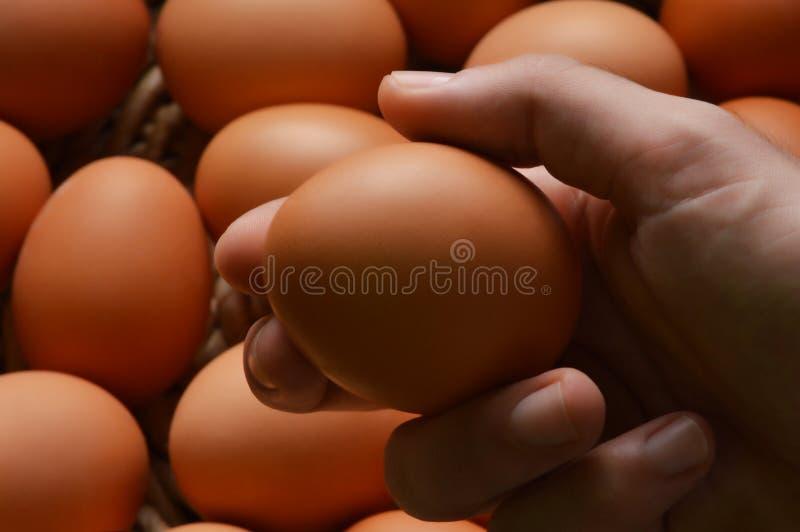 Τα φρέσκα οργανικά αυγά κοτόπουλου σε ένα ψάθινα καλάθι και ένα αρσενικό δίνουν το κράτημα ενός αυγού στοκ φωτογραφία με δικαίωμα ελεύθερης χρήσης