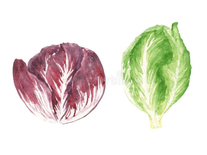 Τα φρέσκα πράσινα απεικόνισης Watercolor θέτουν - σαλάτα radiccio και romano που απομονώνεται στο άσπρο υπόβαθρο ελεύθερη απεικόνιση δικαιώματος