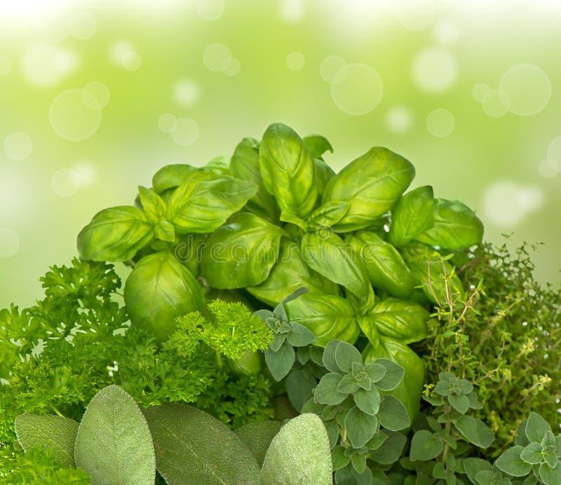 Τα φρέσκα χορτάρια κουζινών επάνω η πράσινη ανασκόπηση στοκ εικόνες