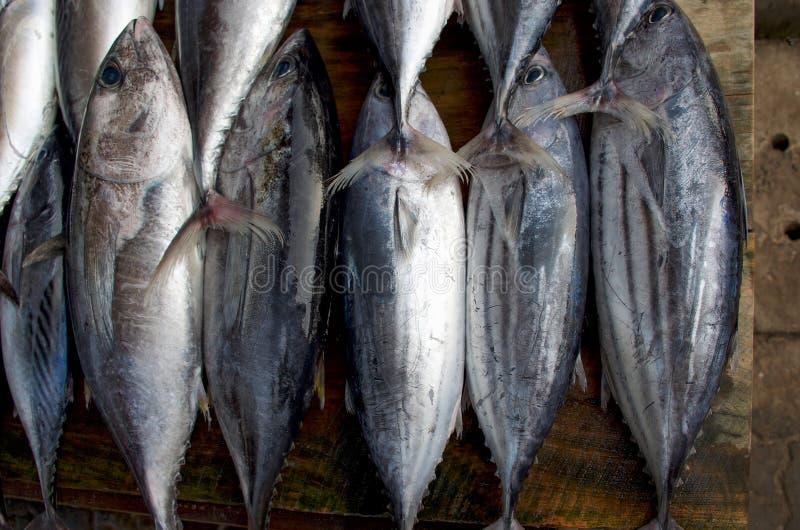Τα φρέσκα ψάρια αντιμετωπίζουν - ακατέργαστος τόνος σε μια σειρά, τοπ άποψη στοκ φωτογραφία με δικαίωμα ελεύθερης χρήσης