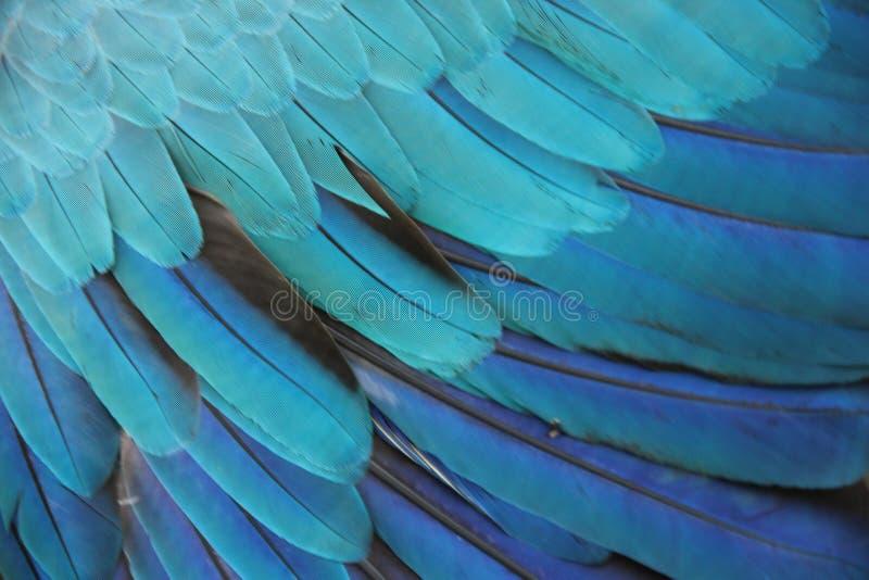 Τα φτερά ενός Macaw στοκ εικόνα