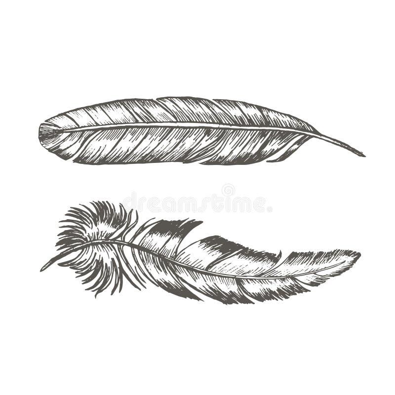 Τα φτερά καθορισμένα το χέρι σύρουν το σκίτσο Καθιερώνον τη μόδα πρότυπο δερματοστιξιών διάνυσμα διανυσματική απεικόνιση