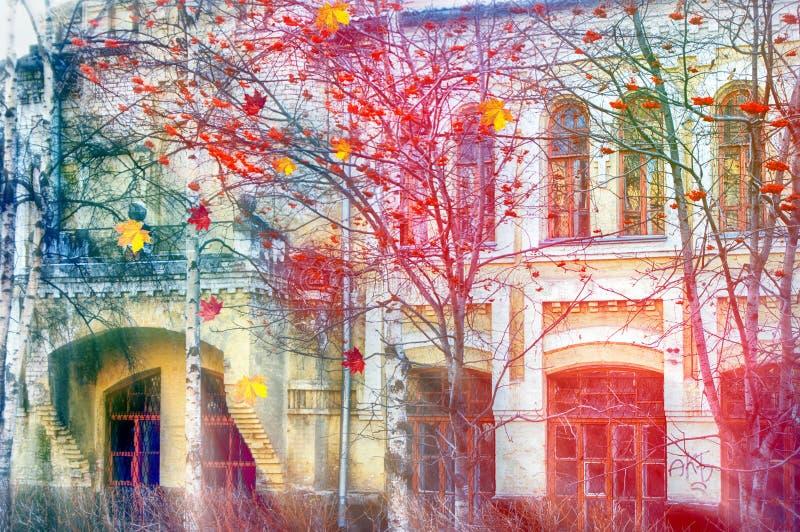 Τα φωτεινά μούρα σορβιών με βγάζουν φύλλα σε ένα δέντρο στοκ φωτογραφία με δικαίωμα ελεύθερης χρήσης