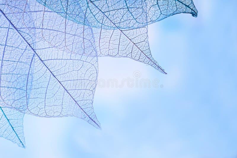 Τα φύλλα σκελετών επάνω το υπόβαθρο, κλείνουν επάνω στοκ εικόνες