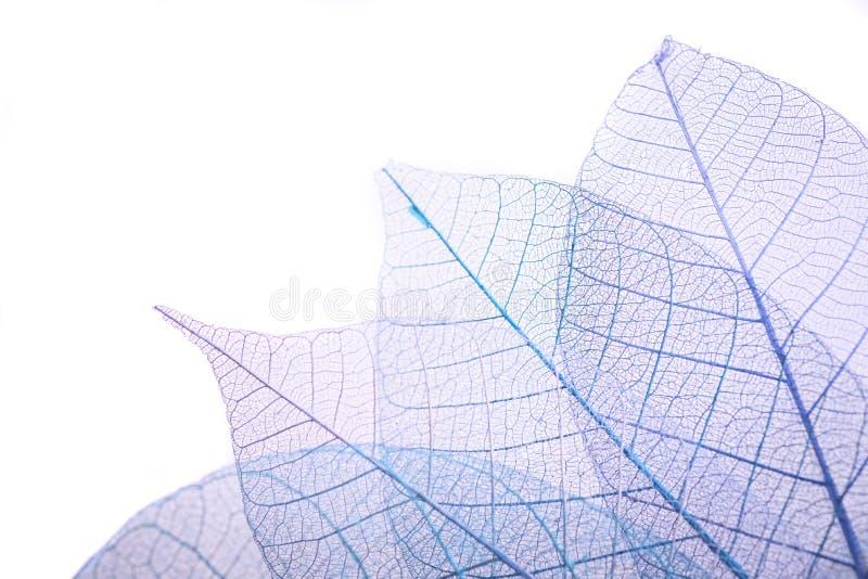 Τα φύλλα σκελετών επάνω το υπόβαθρο, κλείνουν επάνω στοκ φωτογραφίες με δικαίωμα ελεύθερης χρήσης