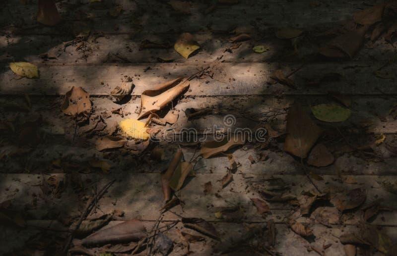Τα φύλλα στους πίνακες στα χρώματα κρητιδογραφιών στοκ φωτογραφία με δικαίωμα ελεύθερης χρήσης