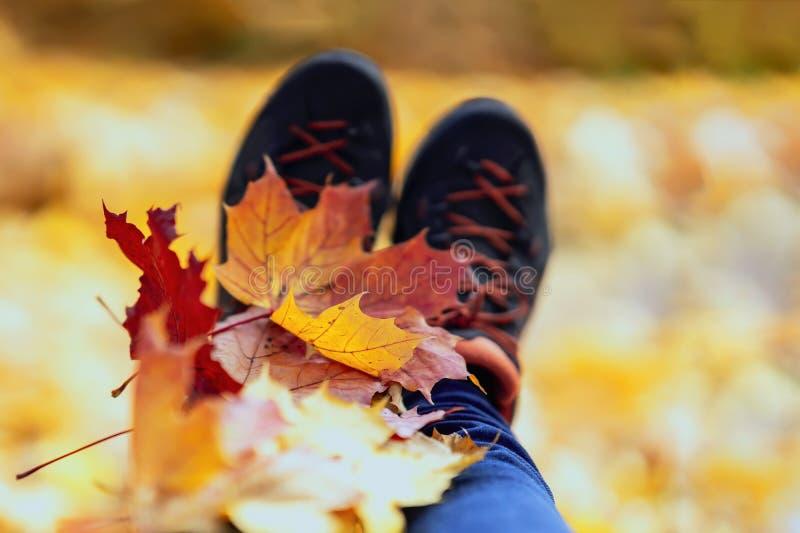 Τα φύλλα σφενδάμου τακτοποίησαν επάνω στα πόδια στα πάνινα παπούτσια Φυσικό φωτεινό υπόβαθρο φθινοπώρου στοκ εικόνες