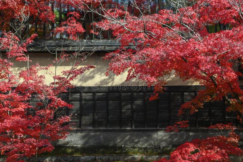 Τα φύλλα του χρώματος αλλάζουν στην αρχαία πόλη Edo στο kurashiki, ΙΑΠΩΝΙΑ στοκ εικόνες