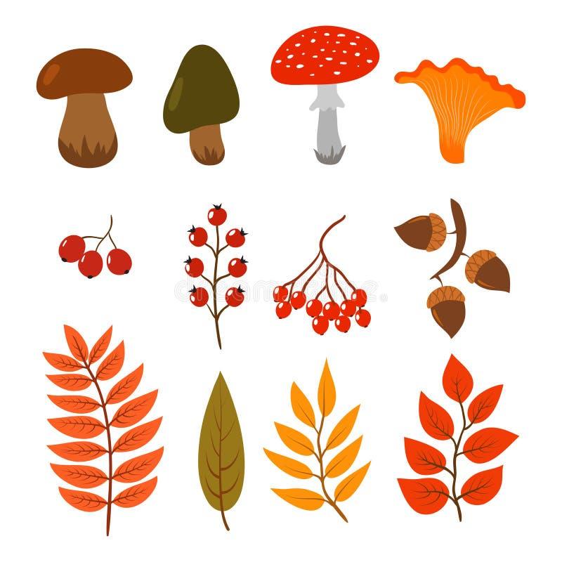 Τα φύλλα φθινοπώρου, ξεφυτρώνουν και μούρα που απομονώνονται στο άσπρο υπόβαθρο Απεικόνιση των δασικών στοιχείων ύφους κινούμενων ελεύθερη απεικόνιση δικαιώματος
