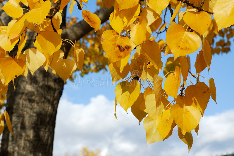 τα φύλλα φθινοπώρου στοκ εικόνες
