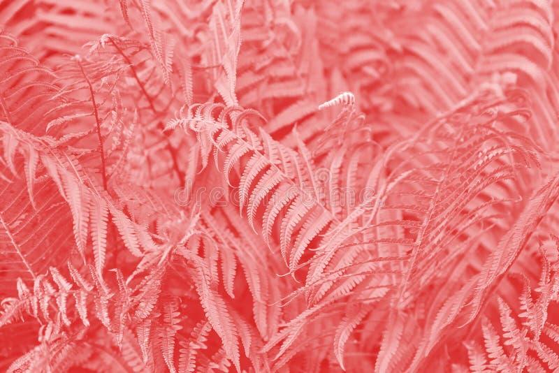 Τα φύλλα φτερών στο χρώμα κοραλλιών διαβίωσης Καθιερώνον τη μόδα φυσικό backgrond στοκ εικόνες με δικαίωμα ελεύθερης χρήσης