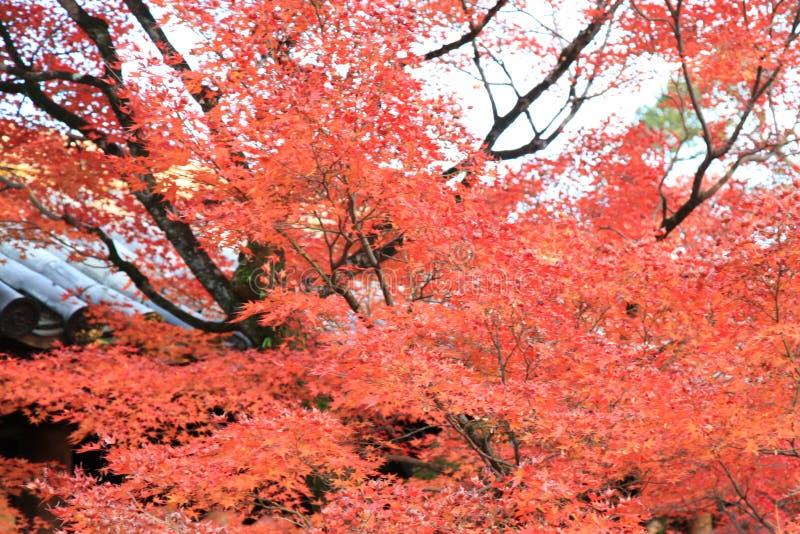 Τα φύλλα χρωματίζουν την αλλαγή στο ναό tofukuji στο Κιότο στην Ιαπωνία στοκ φωτογραφίες