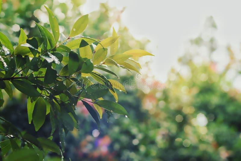 Τα φύλλα Bokeh είναι υγρά μετά από τη βροχή στοκ φωτογραφία με δικαίωμα ελεύθερης χρήσης