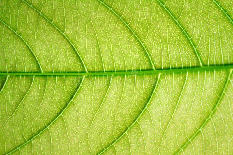 Τα φύλλα είναι απέναντι από το φως στοκ εικόνες