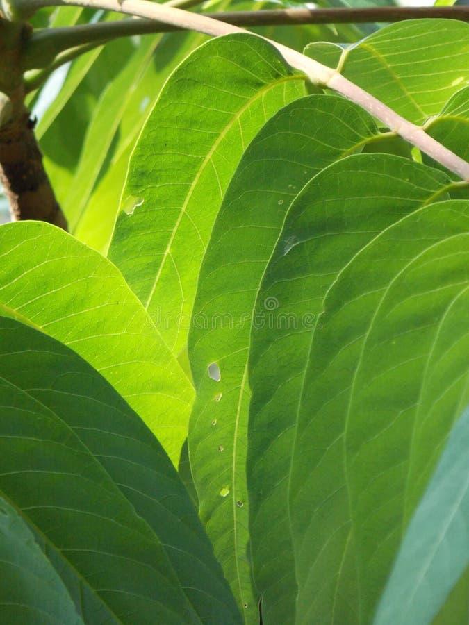 Τα φύλλα που ευθυγραμμίζονται όμορφα στοκ εικόνα
