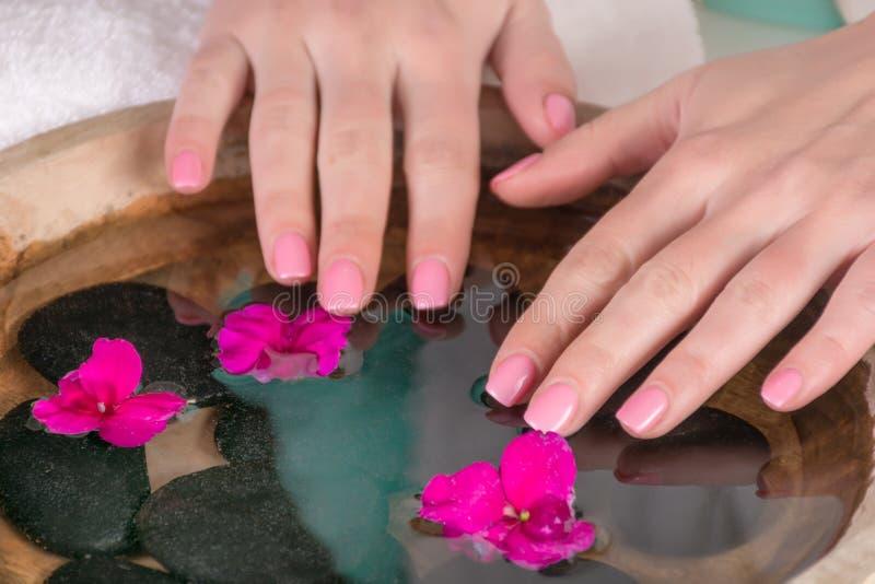 Τα χέρια γυναικών με το ήπια ρόδινο πήκτωμα καρφιών γυαλίζουν ανωτέρω - ποτίστε με τα ιώδη λουλούδια στοκ εικόνα