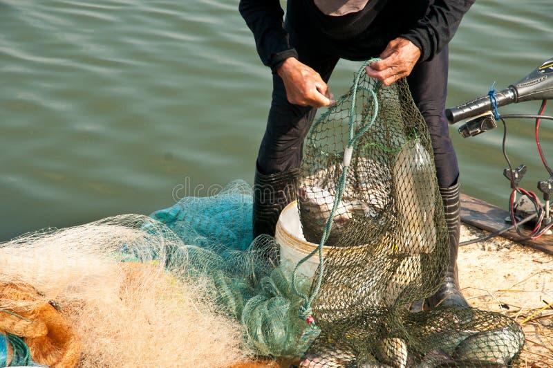 Τα χέρια παίρνουν τα ψάρια στοκ φωτογραφίες με δικαίωμα ελεύθερης χρήσης