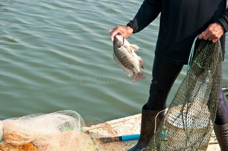 Τα χέρια παίρνουν τα ψάρια στοκ εικόνες