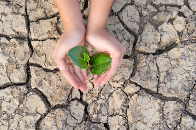 Τα χέρια που κρατούν ένα δέντρο που αυξάνεται στο ραγισμένο έδαφος, εκτός από τον κόσμο, τα περιβαλλοντικά προβλήματα, προστατεύο στοκ φωτογραφίες