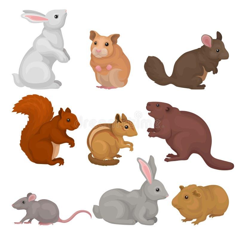 Τα χαριτωμένα τρωκτικά θέτουν, μικρή διανυσματική απεικόνιση άγριων και κατοικίδιων ζώων σε ένα άσπρο υπόβαθρο απεικόνιση αποθεμάτων