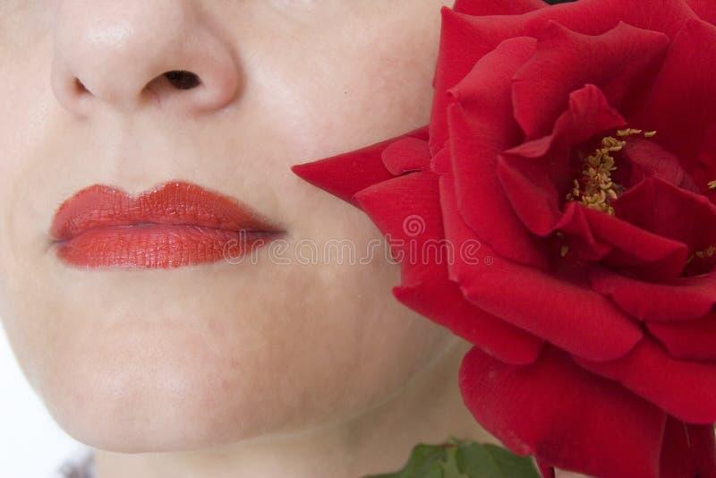 τα χείλια αυξήθηκαν στοκ φωτογραφίες με δικαίωμα ελεύθερης χρήσης