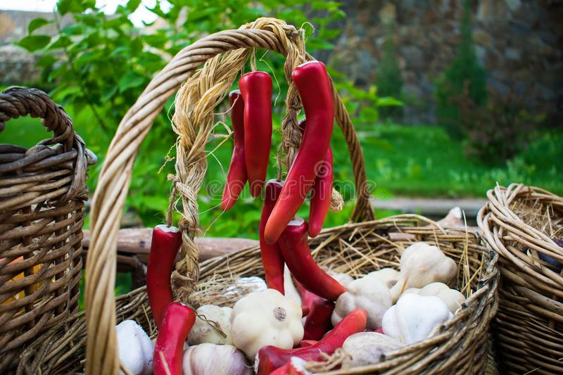 Τα χρήσιμα και ευώδη κεφάλια του ώριμου σκόρδου και της πικάντικης κόκκινης μακροχρόνιας ένωσης πιπεριών σε μια δέσμη, συγκομισμέ στοκ εικόνα με δικαίωμα ελεύθερης χρήσης