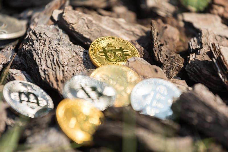 Τα χρυσά και ασημένια νομίσματα bitcoin βρίσκονται στις ξύλινες αλυσίδες πεύκων στοκ εικόνες