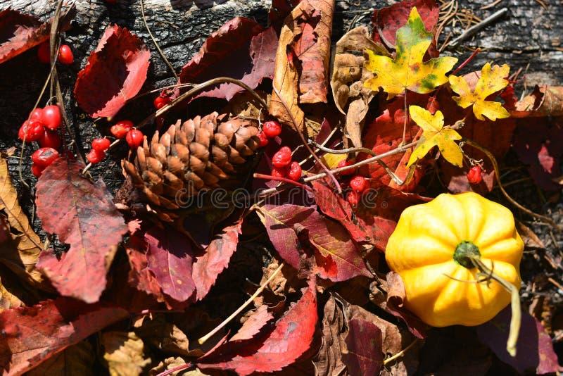 Τα χρώματα του φθινοπώρου στοκ φωτογραφίες