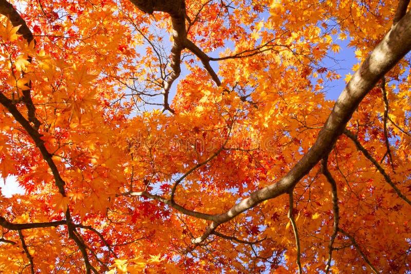 Τα χρώματα του φθινοπώρου στοκ εικόνες με δικαίωμα ελεύθερης χρήσης