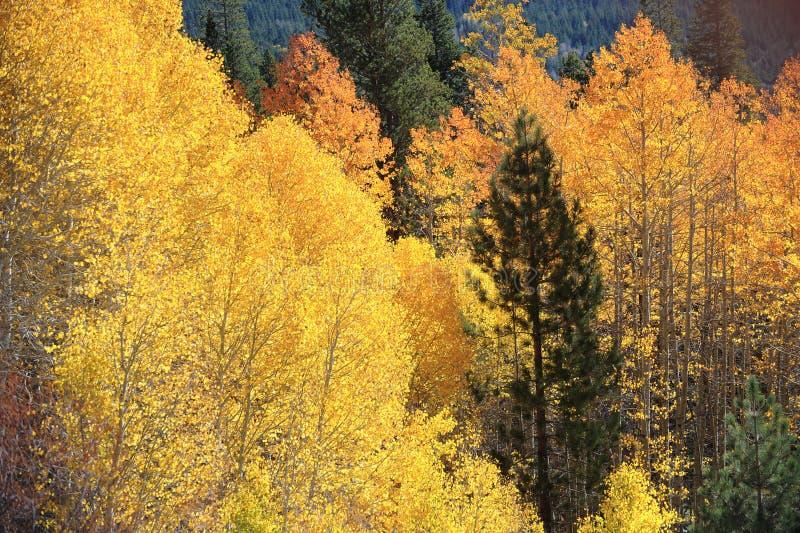 Τα χρώματα φυλλώματος πτώσης χαρακτηρίζουν τη μετατόπιση στις εποχές στοκ εικόνα με δικαίωμα ελεύθερης χρήσης